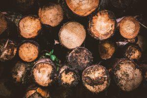 Holzstamm